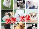 重庆专业可三百出售金毛哈士奇比熊泰迪博美 雪纳瑞 犬品种齐全