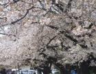 唐山日语培训,日语考级,日语入门等,日本出国留学签证服务