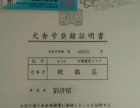 赛级秋田犬5000元(公母均有)
