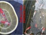 北京小冯渔场,假期特惠活动