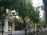枣阳路沿街纯一楼商铺出租 不可餐饮 品牌优先CP