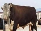 航天牧业 航天牧业加盟招商