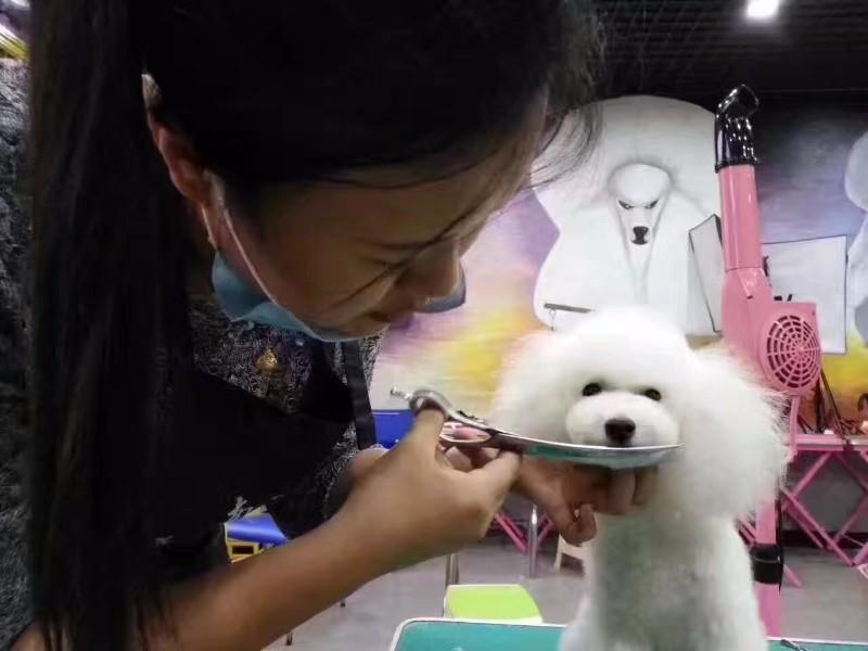 临沂宠物美容学校排行榜 临沂学习宠物美容