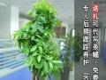 中山植物租赁、办公室写字楼植物租摆、租一年送一月