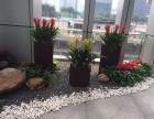 广州海珠区生物岛合景星辉广场附近办公室花草绿植租赁盆栽租摆