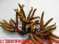 惠城回收冬虫夏草价格