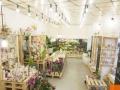 承接各类大型会议花艺布展,各类活动花卉,公司绿植等