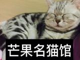 长期出售加菲猫,英短蓝猫