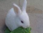 可爱兔宝宝是你最爱的首选快来选择你喜欢的宝贝吧。