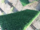 特价草坪,天堂草坪,百慕大草,马尼拉草坪,超低价