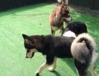 南岸南山植物园宠物寄养中心生意转让