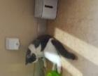 提供宠物猫咪寄养服务