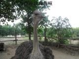 广东喜迎珍禽养殖河北澳洲鸸鹋苗、河北非洲