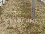 厂家订购 蚂蚱蝗虫养殖网 密度大 透气性好