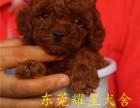 东莞宠物市场在哪个地方 狗市小狗价格多少