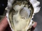 北京生蚝批发生蚝价格 鲜活海蛎子货源