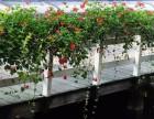 贵阳护栏绿化公司负责遵义市区的阳台护栏绿化和桥体绿化工程施工