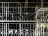 三层十二位鸽子笼肉鸽养殖笼湘潭鸽子笼厂不生锈鸽子笼
