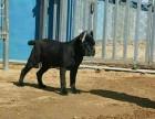 常年出售高品宠物犬幼犬_保健康签协议_品种齐全