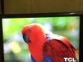 王牌液晶电视55寸1990元,