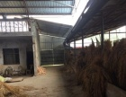 养殖场出租,养牛,设备齐全,就差牛了,400平方,