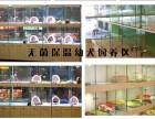 郑州 家养繁殖出售纯种京巴 上门挑选签协议