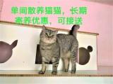 玉带河西街20号院宠物寄养猫狗 养老 收养 价格低 环境好