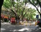 公园路旺铺转让适合做便利店,花店,字画,古玩等商铺