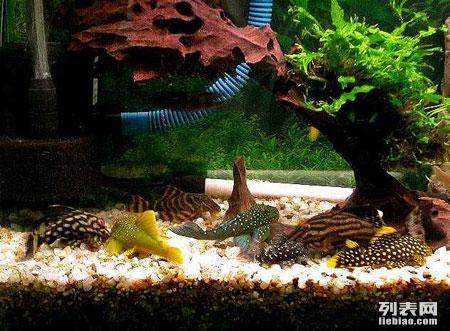 专业治疗观赏鱼疾病 鱼缸专业清洗 造景 维修 鱼缸电路检测