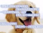 专业审批北京朝阳食品店的特许经营许可备案