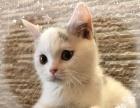 贝斯特猫咪咖啡馆,各国名猫出售,还有下午茶