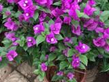 植物墙 室内外绿墙 永生苔藓墙 仿真绿墙 庭院花园