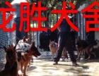 春节狗狗』寄养,训练首首广州ξ龙胜犬舍