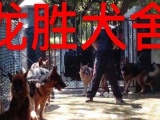 春节狗狗寄养,训练首首广州龙胜犬舍