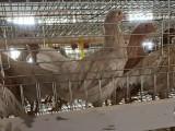 常盛禽业农大3号青年鸡采用中农榜样蛋鸡育种公司鸡苗培育