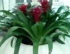重慶庭院綠化,別墅 酒店 醫院 商場綠化設計施工養護