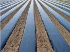 PE消雾膜生产厂家 想买高质量的黑白膜就到新农塑料厂