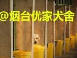 烟台优家犬舍繁殖基地保品相保健康送货上门品种齐全