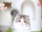 纯种加菲猫出售 包子脸水滴眼 自家繁育 欢迎上门挑