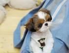 繁殖西施犬品种齐全 各类纯种名犬 活签协议