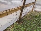 厂家直销 蚂蚱养殖网 密度大 易存活