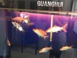 卖16条锦鲤加高大上鱼缸