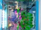 精品小型鱼缸