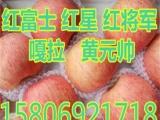 山东红富士苹果价格永安