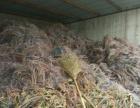 高价回收一切废铜废旧电缆