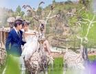 11月婚纱抢拍 相册免费送 产品免费做 婚纱免费送