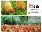 大宋叫化鸡加盟 地方特产 投资金额 1万元以下