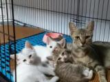 深圳市宠物寄养猫咪寄养上门接送协议寄养上门喂猫