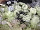 深圳峻峰专业回收塑胶料胶头水口塑胶料收购
