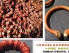 上海市大小金刚菩提批发 哪里卖金刚菩提地方